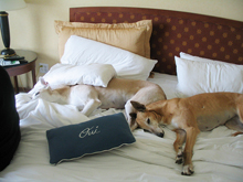 Grand Canyon dog friendly hotel, pet friendly hotel in Grand Canyon